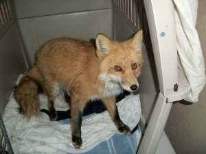 perry-park-fox-4-12-20111