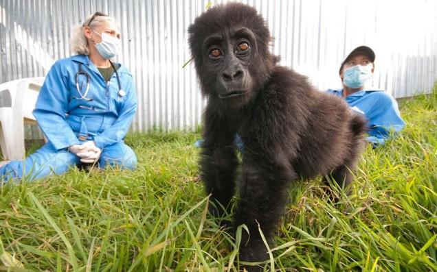 gorilla-doctors_2410070k