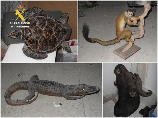 1. ANIMALES NATURALIZADOS INTERVENIDOS