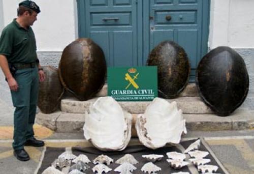 Tortugas_CITES_01_260908_1__810368375