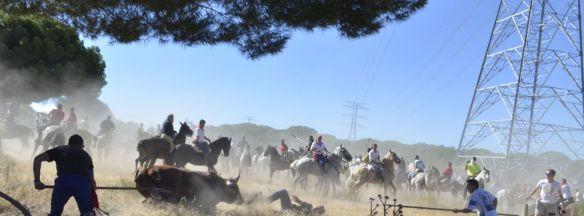 Celebracion-torneo-Toro-Vega-Tordesillas_EDIIMA20130917_0281_3