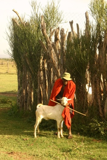 IMG_2894-oWNER-WITH-FAVOURITE-GOAT-OUTSIDE-BOMA