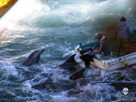 news-150520-1-january-19-bottlenose-dolphins-run-over-by-skiffs-1000w