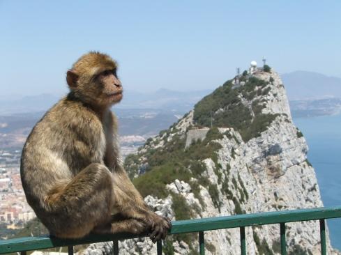 Rock_of_Gibraltar_Barbary_Macaque