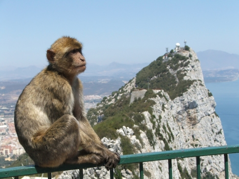 Rock_of_Gibraltar_Barbary_Macaque