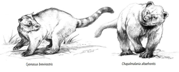 white-nosed-coati-group-walking.jpg
