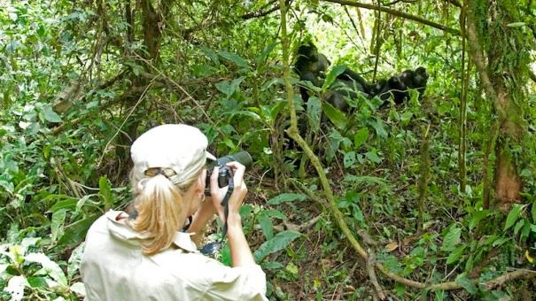 luxury-lodge-uganda-GorillaForestCamp-10.jpg