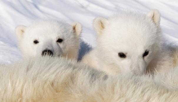 rene_twin_cubs.jpg