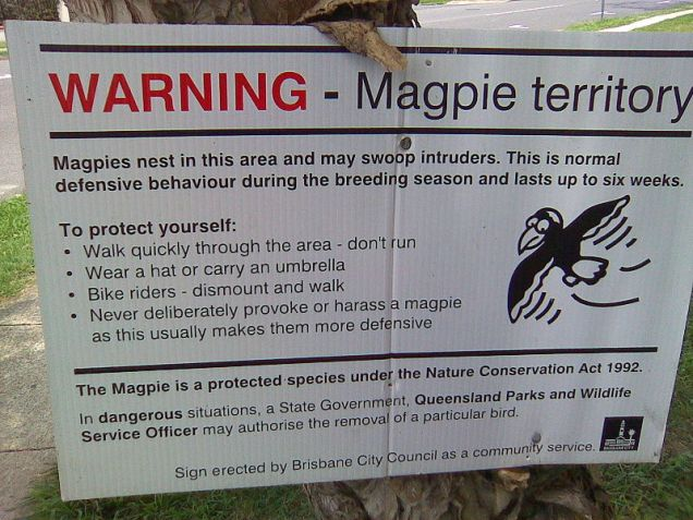 magpie-warning-sign.jpg