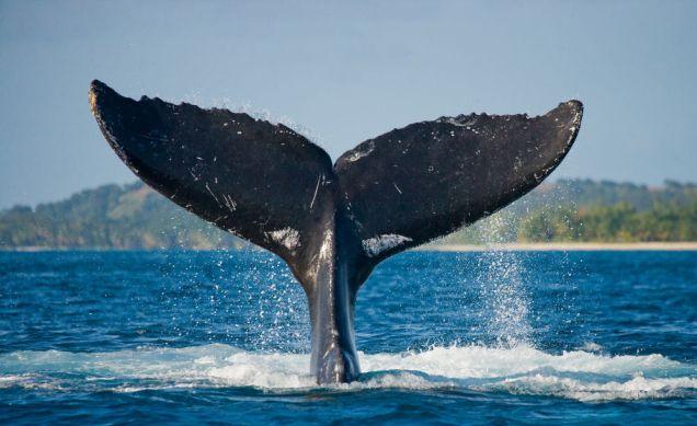 llm-whale-pee