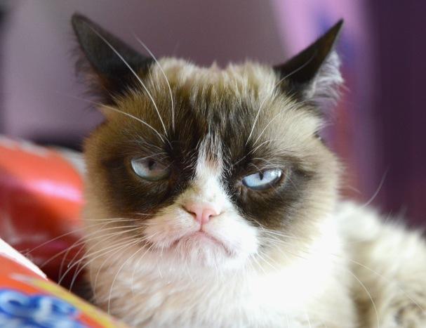Grumpy-Cat-6.jpg