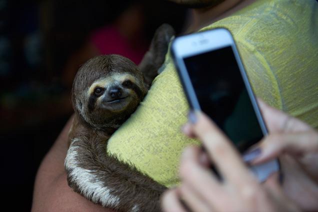 sloth-selfie-4.jpg